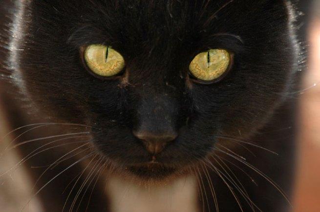 gato-negro-bueno